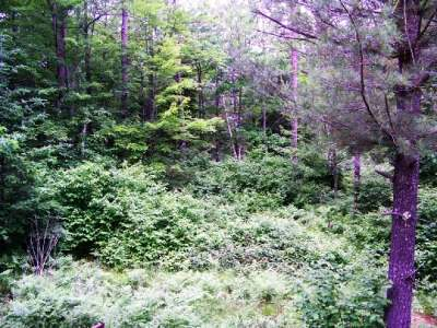 Minocqua WI Residential Lots & Land For Sale: $39,900