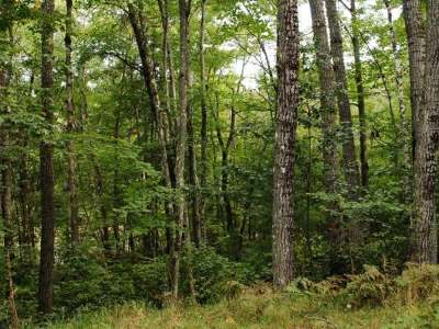 Arbor Vitae WI Residential Lots & Land For Sale: $29,900