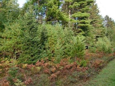 Residential Lots & Land For Sale: On Spruce Meadows Ln #Lot 11