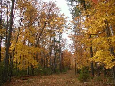 Three Lakes Residential Lots & Land For Sale: On Van Bussum Rd #Lots 2,