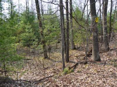 Minocqua WI Residential Lots & Land For Sale: $59,900