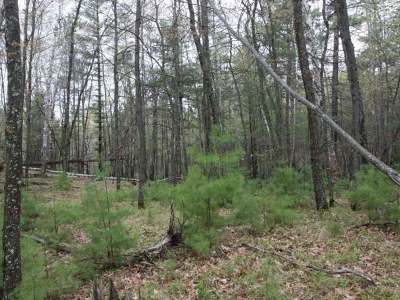 Forest County, Iron Wi County, Langlade County, Lincoln County, Oneida County, Vilas County Condo/Townhouse For Sale: Lot 13 Oak Dr