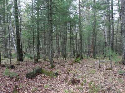 Forest County, Iron Wi County, Langlade County, Lincoln County, Oneida County, Vilas County Condo/Townhouse For Sale: Lot 14 Oak Dr