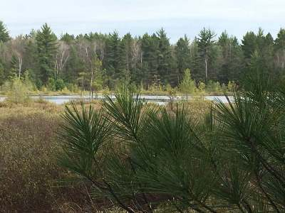 Vilas County Residential Lots & Land For Sale: Off Dollar Ln #Lot #23
