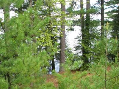 Three Lakes Residential Lots & Land For Sale: Near7969 Four Mile Lake Rd
