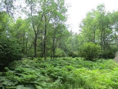 Rhinelander Residential Lots & Land For Sale: On Crescent Creek Dr W #Lot 21