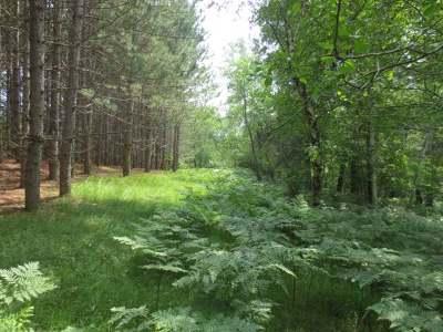 Rhinelander Residential Lots & Land For Sale: On Crescent Creek Dr W #Lot 22