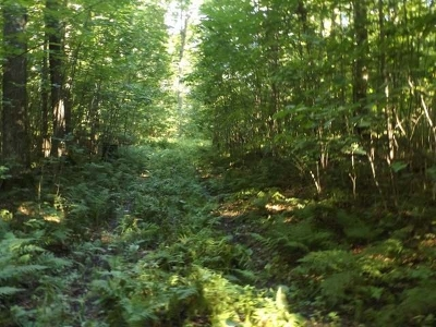 Crandon Residential Lots & Land Active O/C: 36+ Acre Jungle Lake Rd