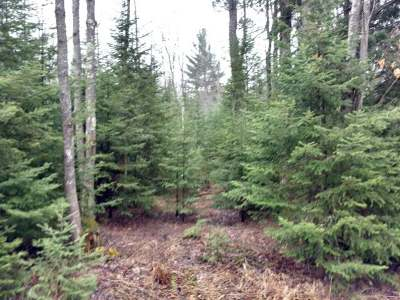 Sugar Camp Residential Lots & Land For Sale: On Jennie Webber Lake Rd