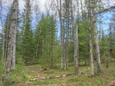 Forest County, Iron Wi County, Langlade County, Lincoln County, Oneida County, Vilas County Condo/Townhouse For Sale: 1798 Wilderness Tr #Lot 6