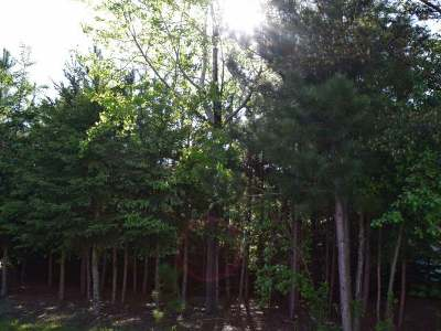 Residential Lots & Land For Sale: 12184 Big Springs Tr