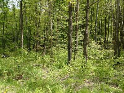 Crandon Residential Lots & Land For Sale: Lot 5 Sand Lake Rd