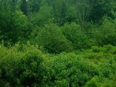 Tripoli Residential Lots & Land For Sale: 38 Acres Honey Rd