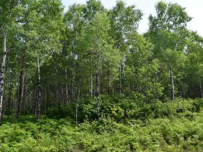 Rhinelander Residential Lots & Land For Sale: Lot 12 Autumn Ln