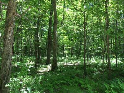 Pickerel Residential Lots & Land For Sale: Unit #54 Chip N Dale Rd
