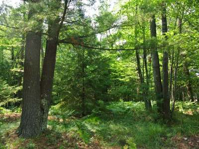 Minocqua WI Residential Lots & Land For Sale: $35,000
