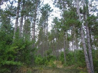 Oneida County, Lincoln County, Price County Residential Lots & Land For Sale: 140 Acre Myers Rd