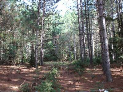 Eagle River Residential Lots & Land For Sale: On Watersmeet Lake Rd