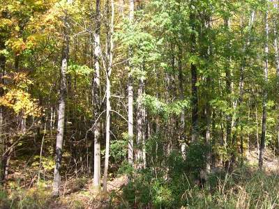 Residential Lots & Land For Sale: On Little Sand Lake Dr