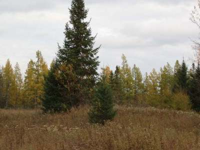 Park Falls Residential Lots & Land For Sale: On Helberg Rd