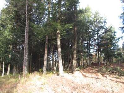 Residential Lots & Land For Sale: Near Pine Forest Rd
