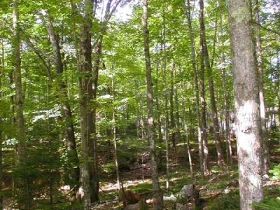 Residential Lots & Land For Sale: On Hwy 155 #Lot 3