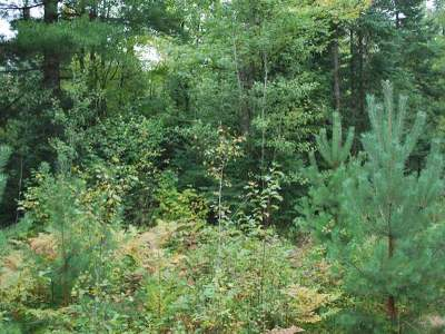 Residential Lots & Land For Sale: Near Old 8 Rd #Lot 3