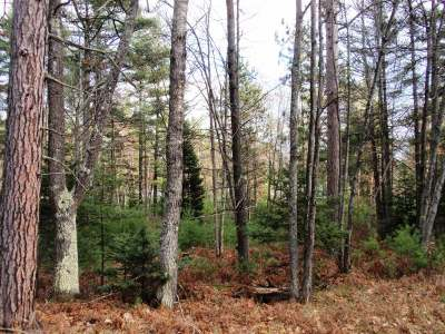 Eagle River Residential Lots & Land Active O/C: Lot #4 Hwy 45