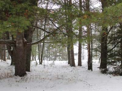 Eagle River WI Residential Lots & Land For Sale: $79,900