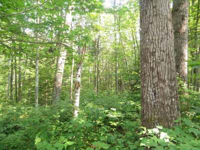 Residential Lots & Land For Sale: Lot 28 Big Thunder Ln