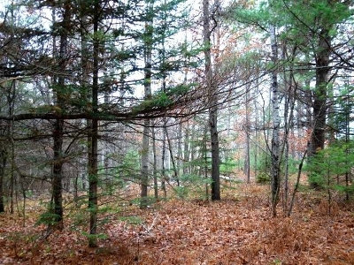 Residential Lots & Land For Sale: On Lakeland Dr