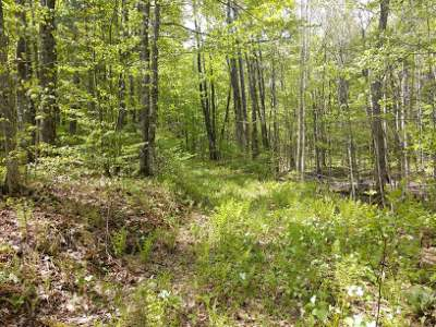 Crandon Residential Lots & Land For Sale: 15 Acres Sand Lake Rd