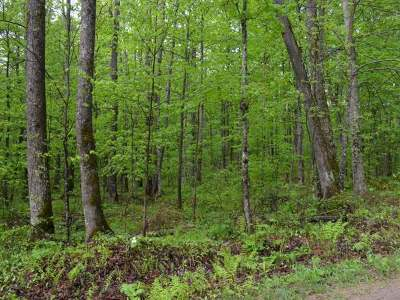 Crandon Residential Lots & Land For Sale: On Flannery Ln #Lot 5