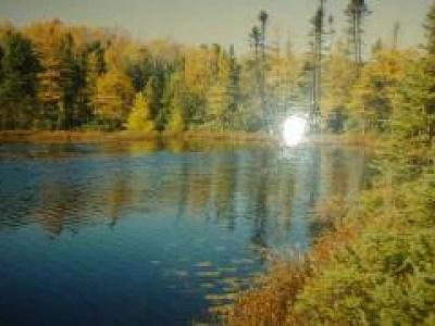 Harshaw WI Residential Lots & Land For Sale: $49,900
