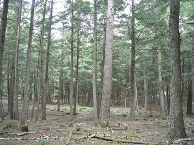 Three Lakes WI Residential Lots & Land For Sale: $53,000