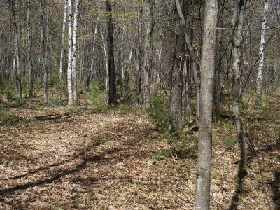 Forest County, Iron Wi County, Langlade County, Lincoln County, Oneida County, Vilas County Condo/Townhouse For Sale: On Crappie Ct #10