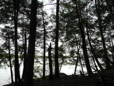 Pickerel WI Residential Lots & Land For Sale: $179,900