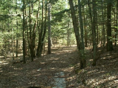 Three Lakes Residential Lots & Land For Sale: 7238 Chicken In The Woods Rd