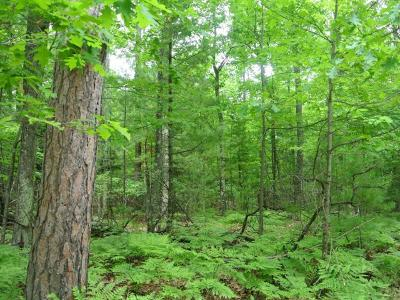 Three Lakes WI Residential Lots & Land For Sale: $34,900