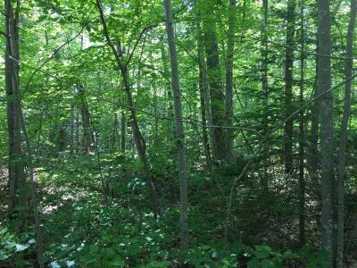 Lac Du Flambeau WI Residential Lots & Land For Sale: $29,900