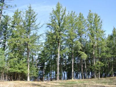 Residential Lots & Land For Sale: Lot 9 Bo Di Lac Dr S