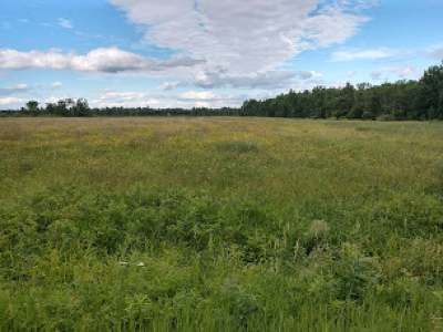 Residential Lots & Land Active O/C: 20 Acres Town Forest Rd