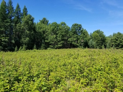Three Lakes Residential Lots & Land For Sale: On C W Smith Rd