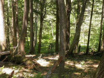 Woodruff WI Residential Lots & Land For Sale: $59,000
