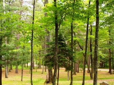 Residential Lots & Land For Sale: Lot 8 Forest Circle Dr