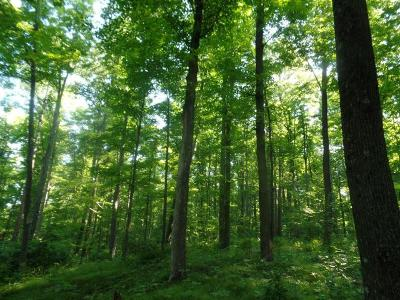 Pickerel Residential Lots & Land For Sale: 157 Ac Hwy 52