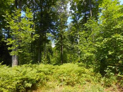 Residential Lots & Land For Sale: On Hwy 55
