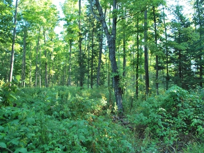 Residential Lots & Land For Sale: On Hwy 32