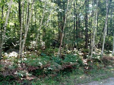 Rhinelander Residential Lots & Land For Sale: On Romps Dr