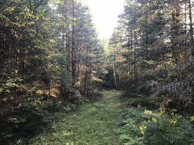 Residential Lots & Land For Sale: 215 Ac. Price County Rd